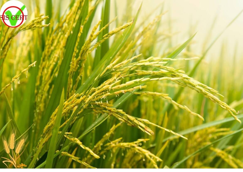 Sản xuất hữu cơ và chứng nhận hữu cơ.
