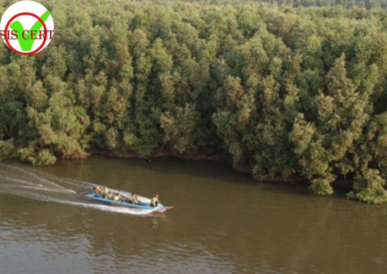 Chứng chỉ quản lý rừng bên vững là gì?Một số yêu cầu của quản lí rừng bền vững